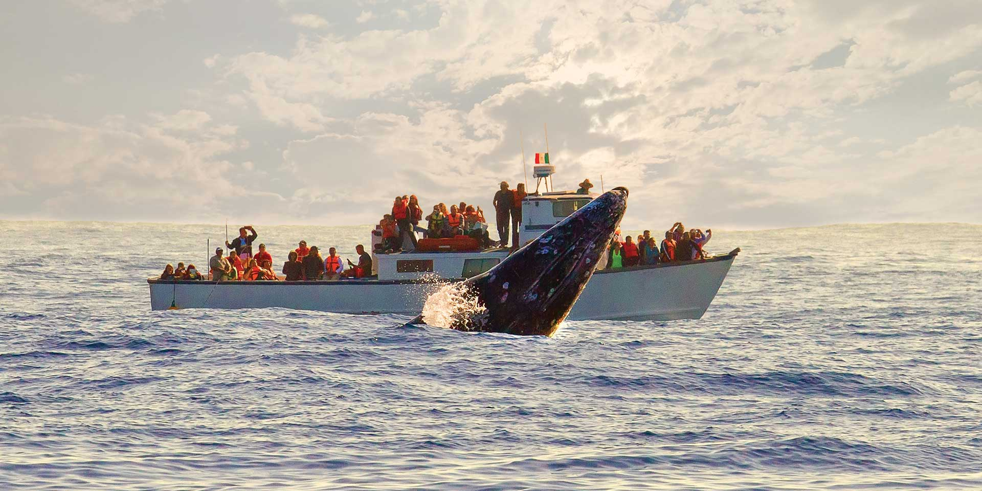 avistamiento ballenas baja california-2