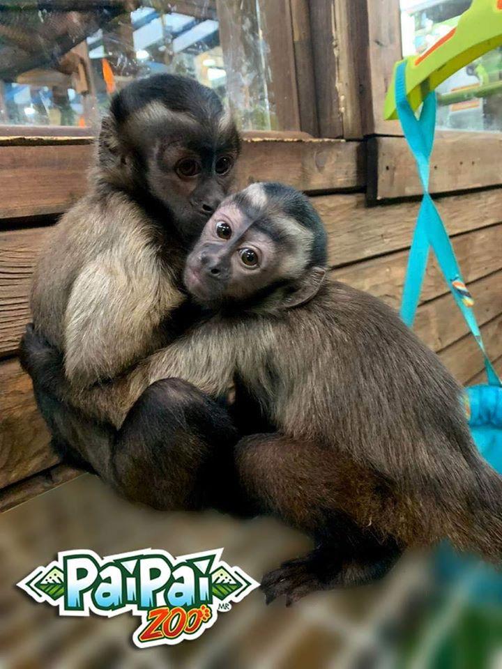 PaiPai Ecoturism Park 01