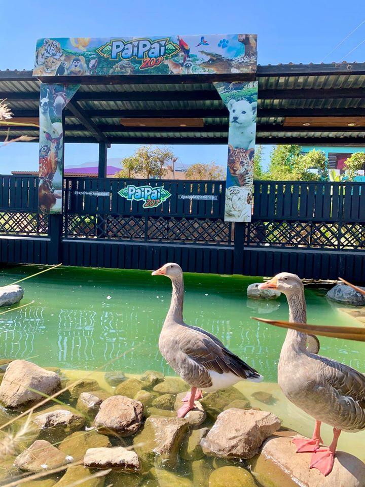 PaiPai Ecoturism Park 05